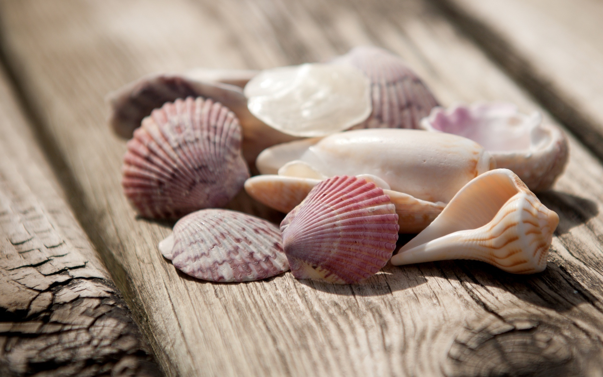 ракушка shell  № 248895 загрузить