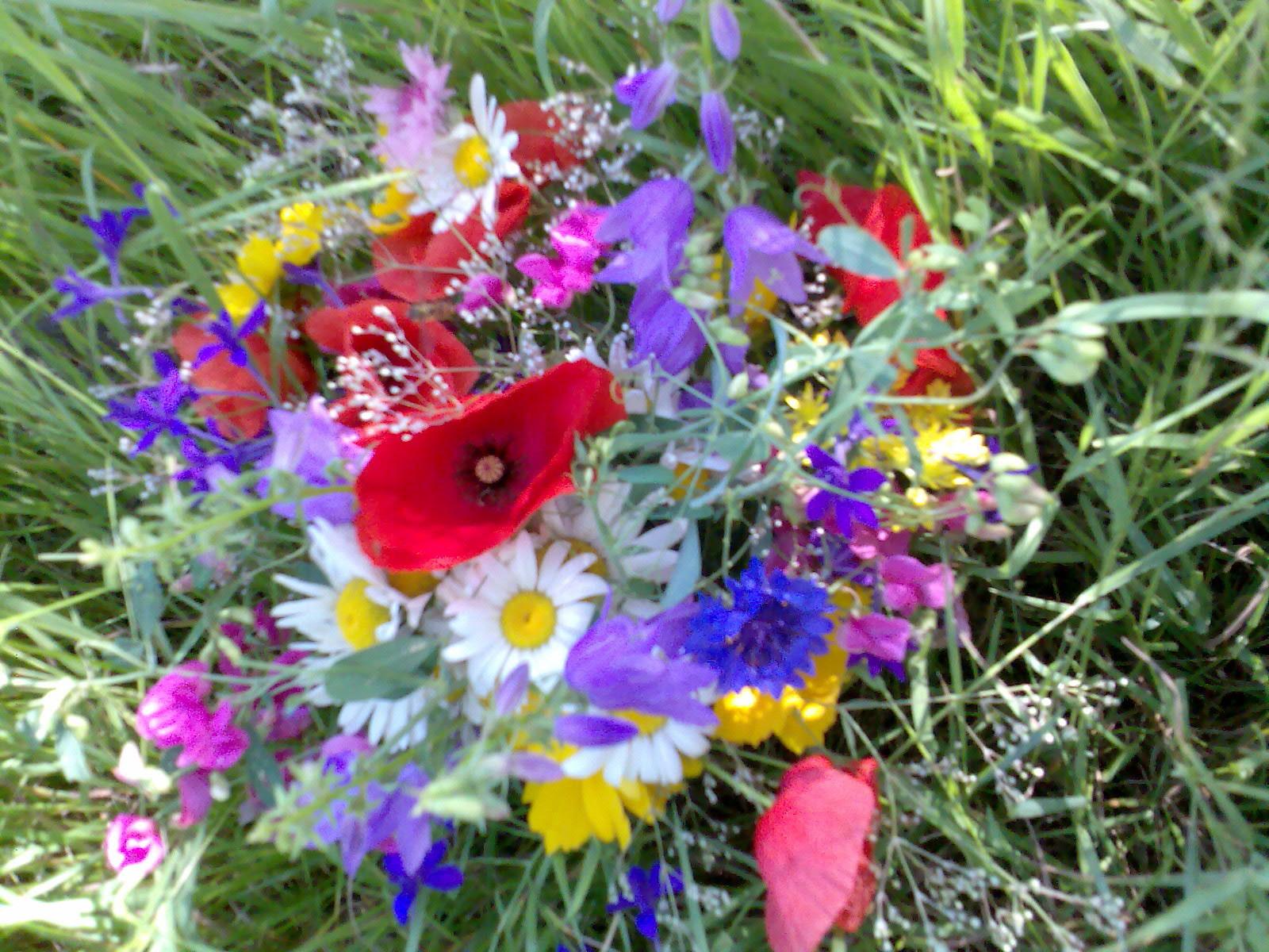 Букет степных цветов