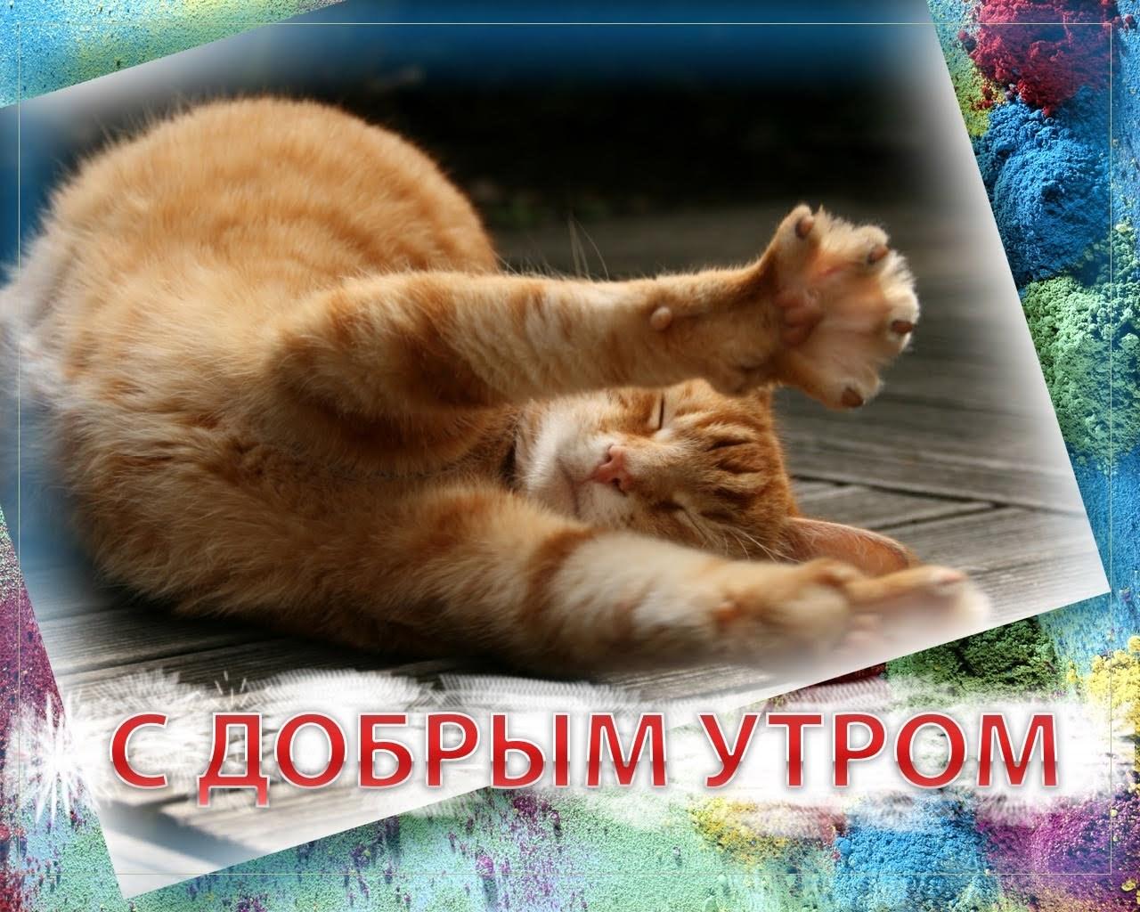 С Добрым утром, котенок! - гиф анимация 97