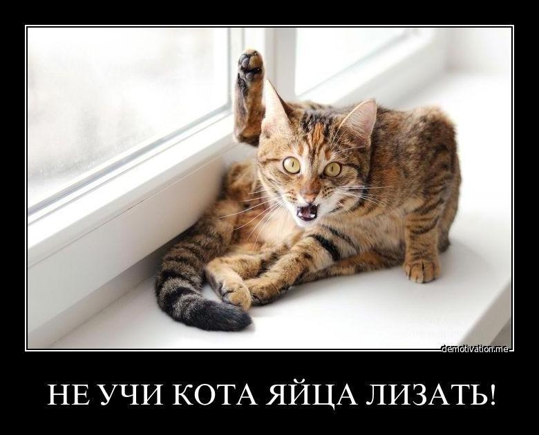 Смешные картинки с котами с надписями до слез, утро