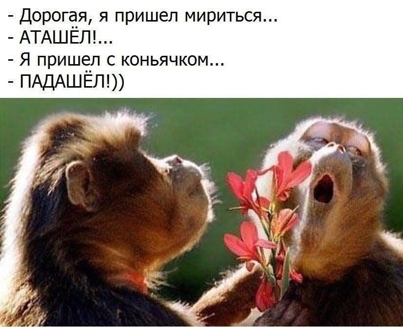 Цой, доброе утро любимый картинки красивые с надписью прикольные с шимпанзе