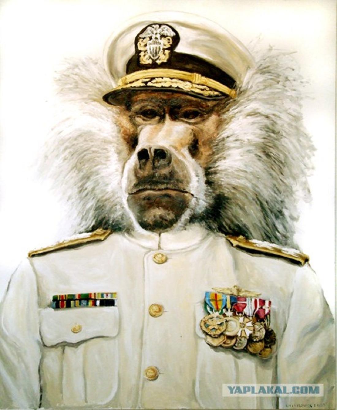 ночные обезьяна в форме картинки корпуса
