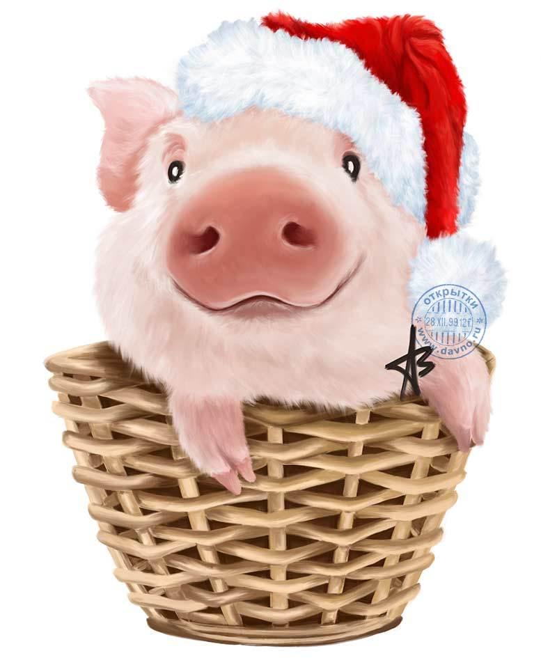 Картинки с свиньями новогодние, смешного рублях
