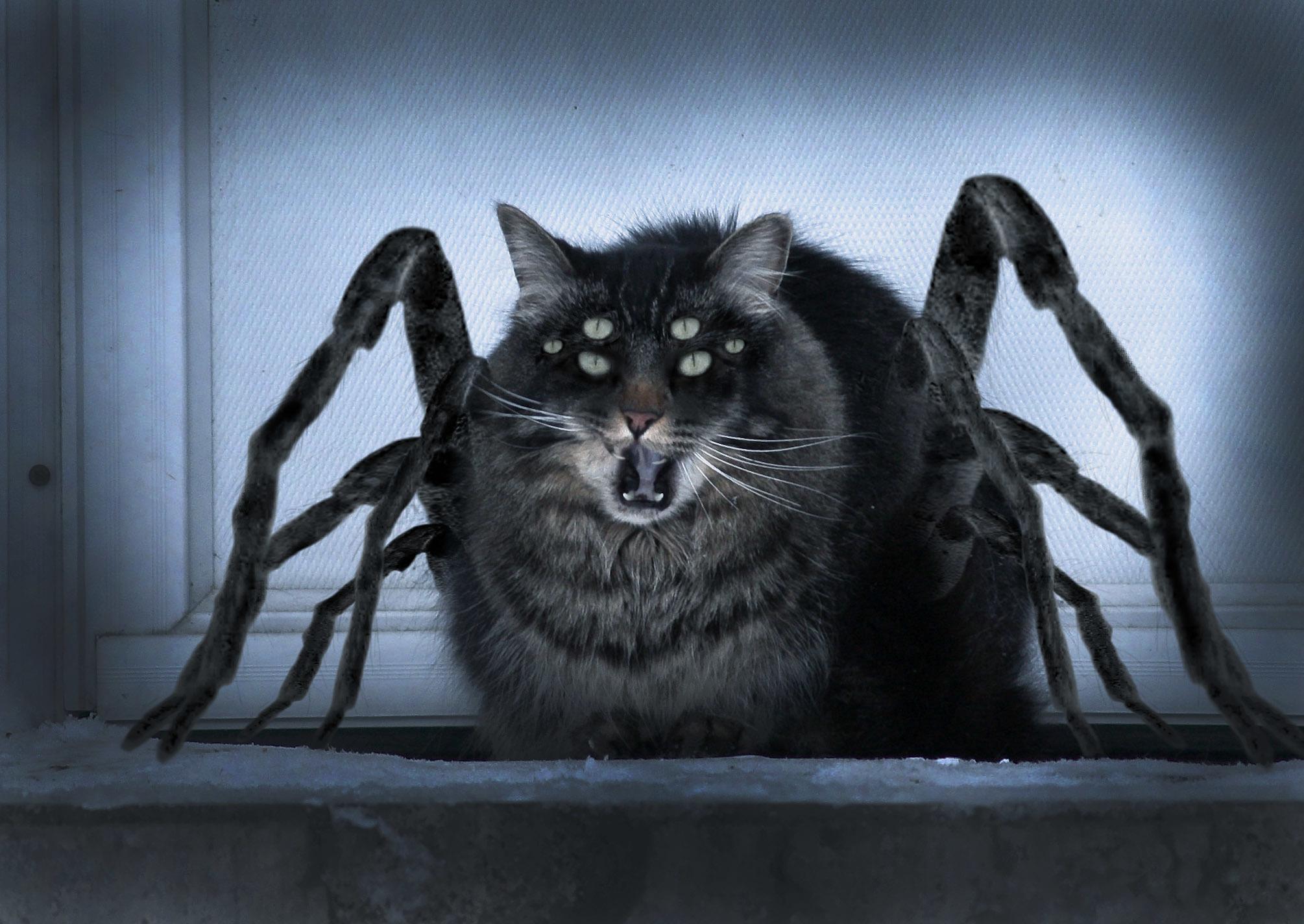 советском картинки монстров кошечек стоматита