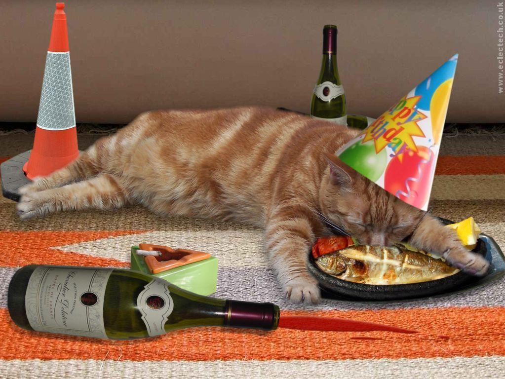 Поздравления от котов