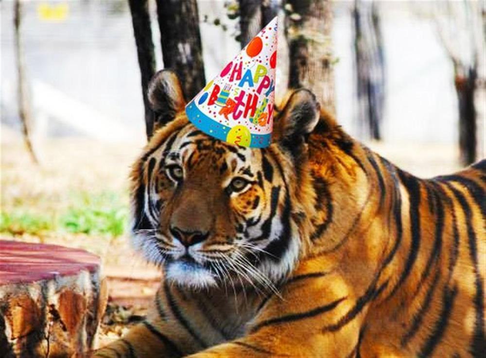Открытки с изображением тигров, пожеланием