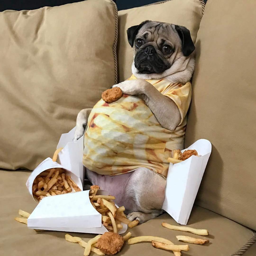 Собака не ест похудела