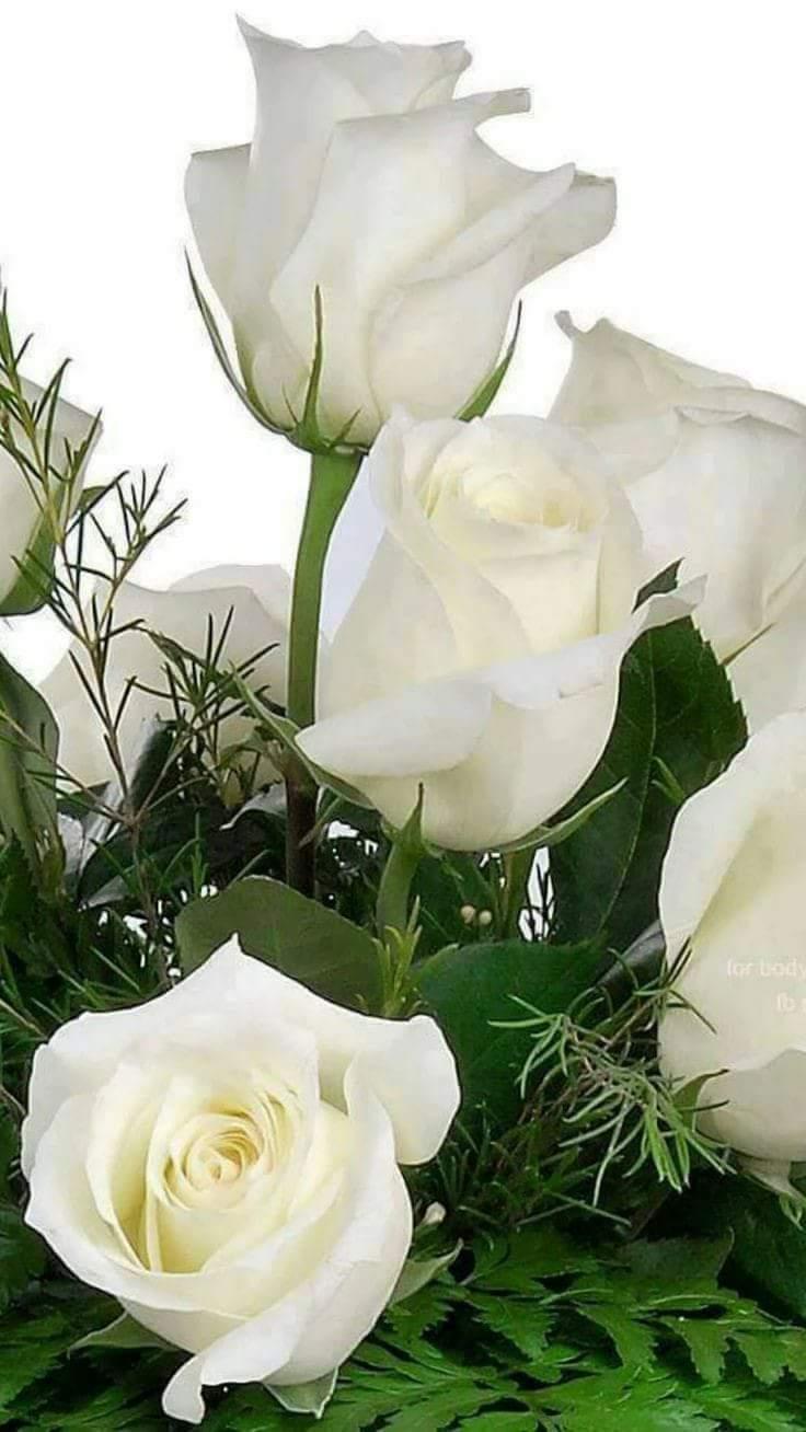 Открытки с днем рождения с белыми розами анимация