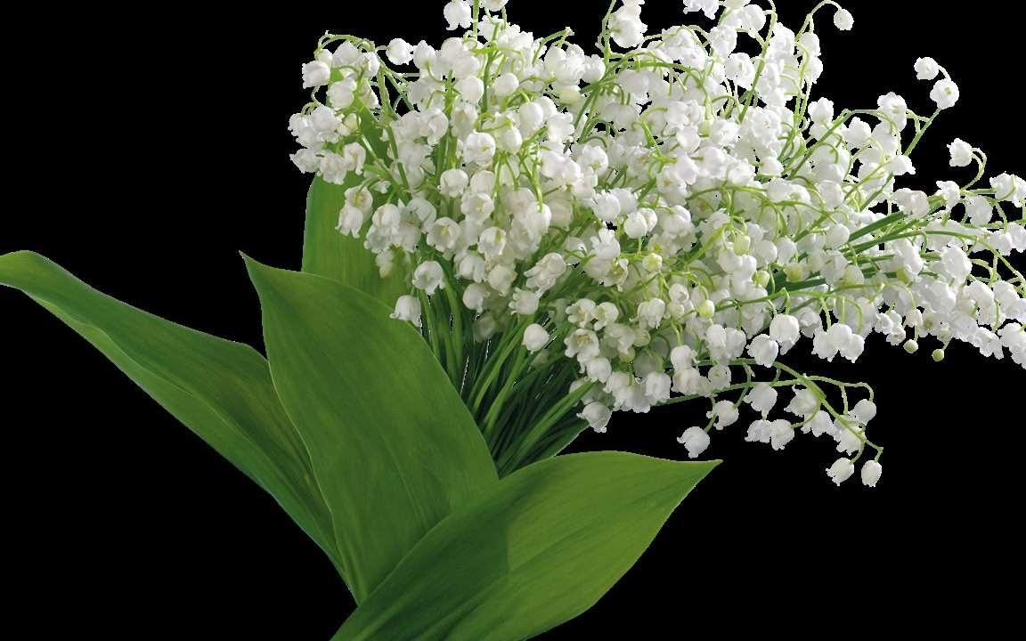 Открытка цветы ландыши, здоровье