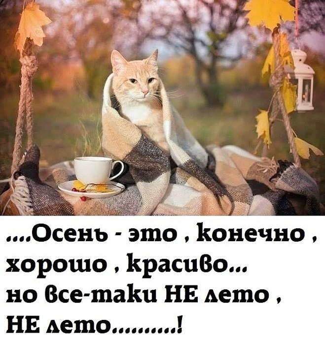Кот, смешные картинки надписи про осень