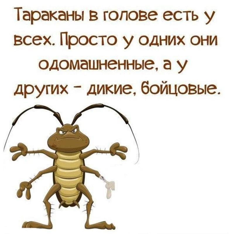 видимо юмор картинки про тараканов ищет след денег