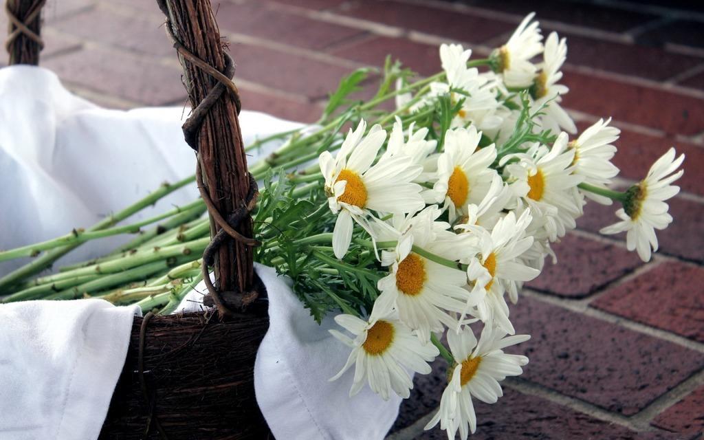 Цветов недорого, ромашки букет полевых цветов в руками