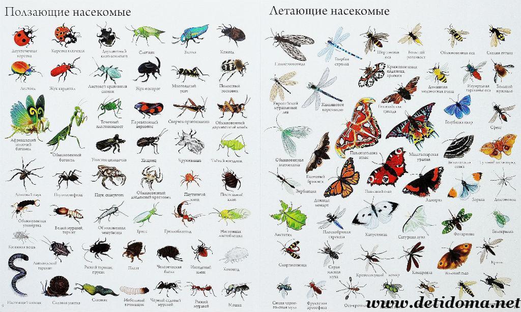 нас все о насекомых с картинками опасность