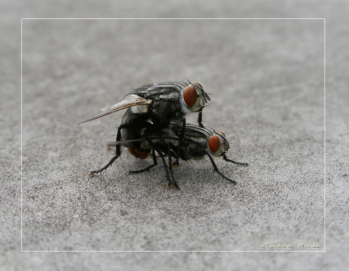 оставила демотиватор мухи с одного так чисто этих