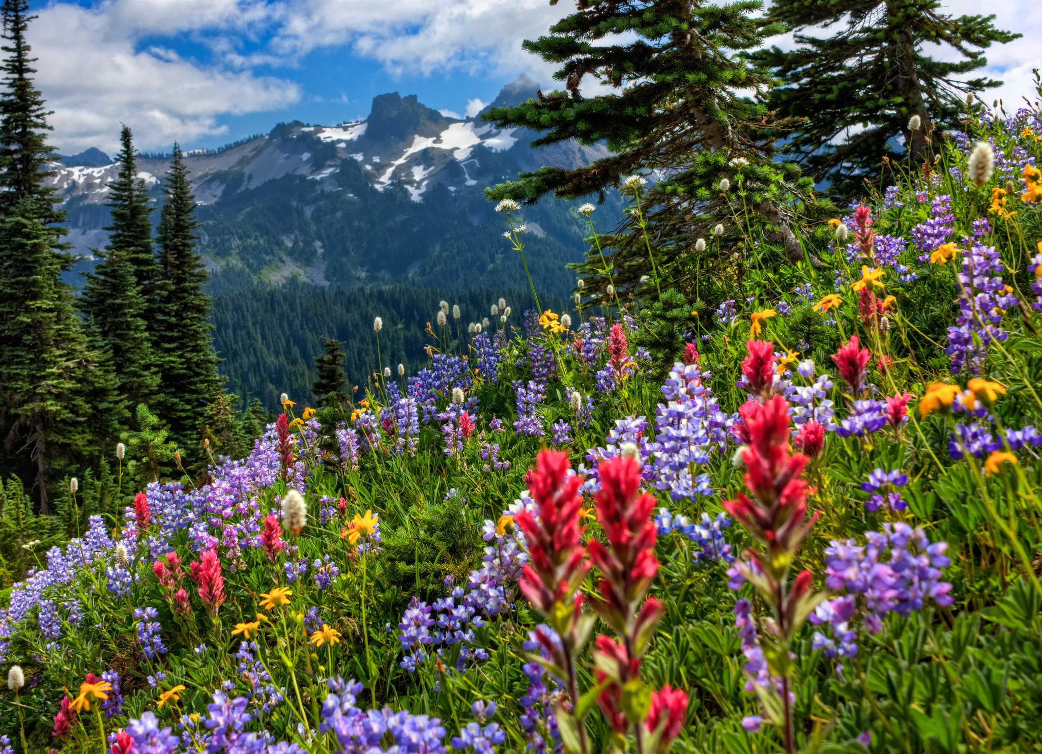 Комнатные растения, фото цветов, домашние цветы ...