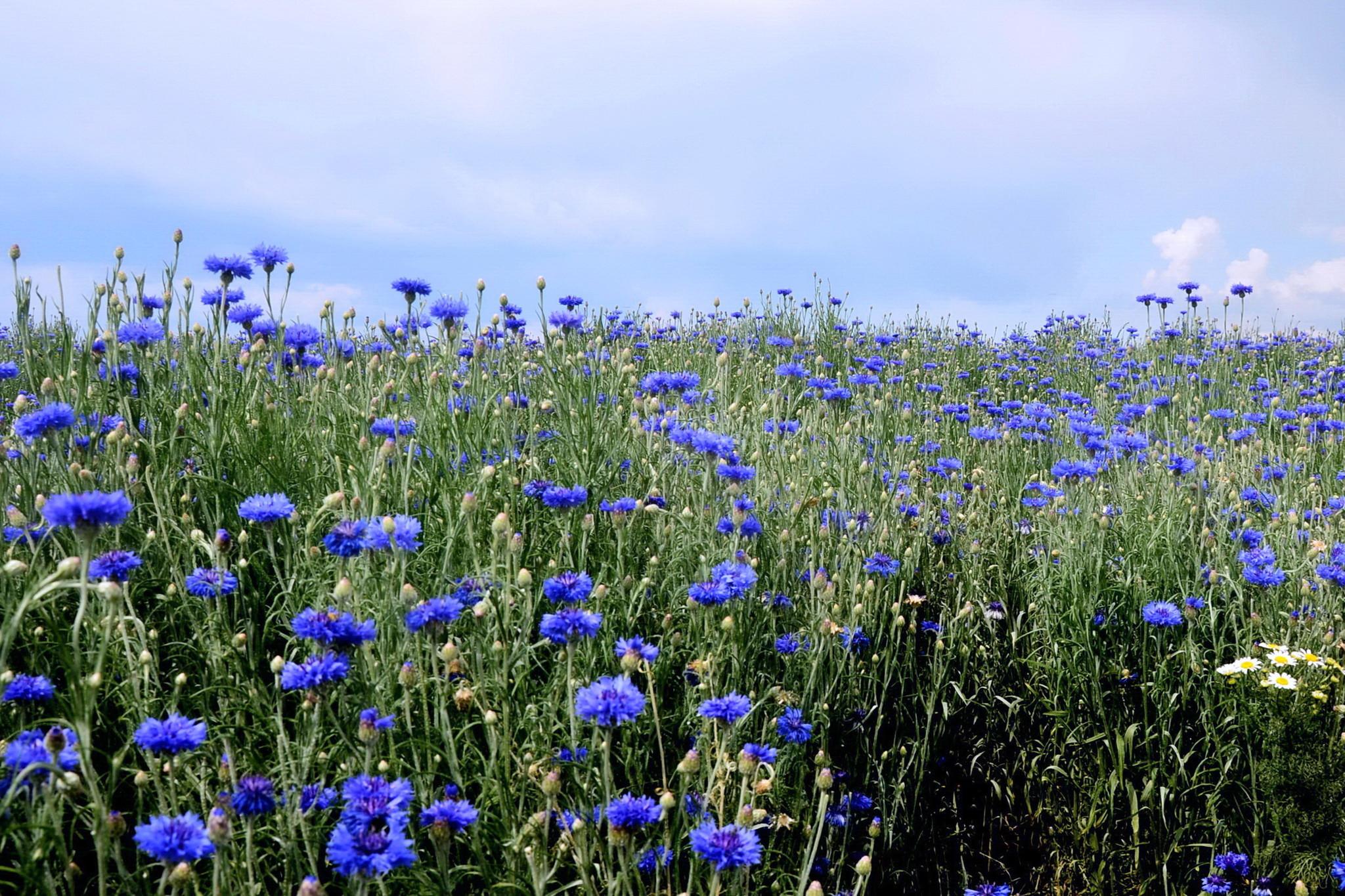 Полевые цветы гифы вставить фото, днем рождения